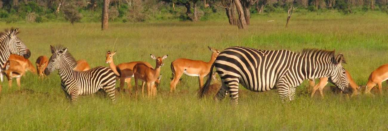 2-day-safari-from-dar-es-salaam-mikumi