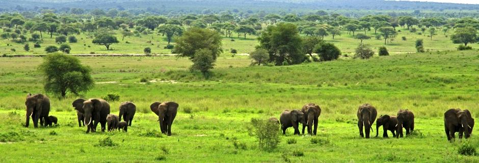 Tanzania; Tarangire; Elephants