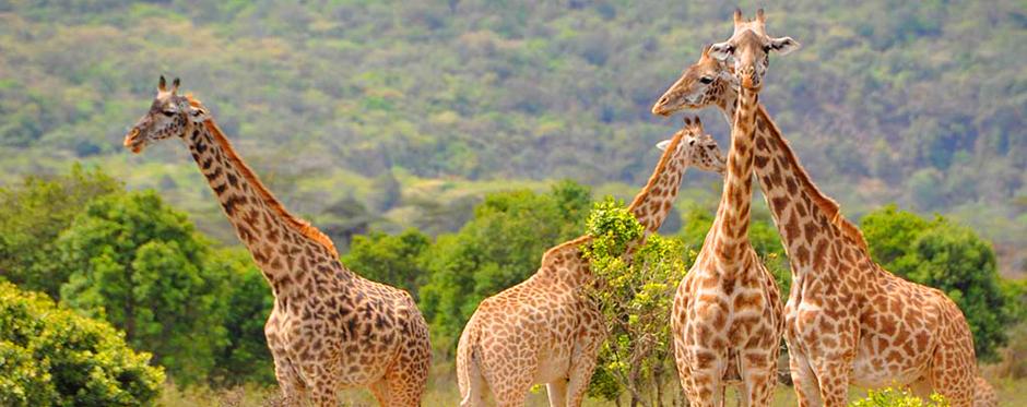 Arusha-National-Park-Bush-Safaris-1