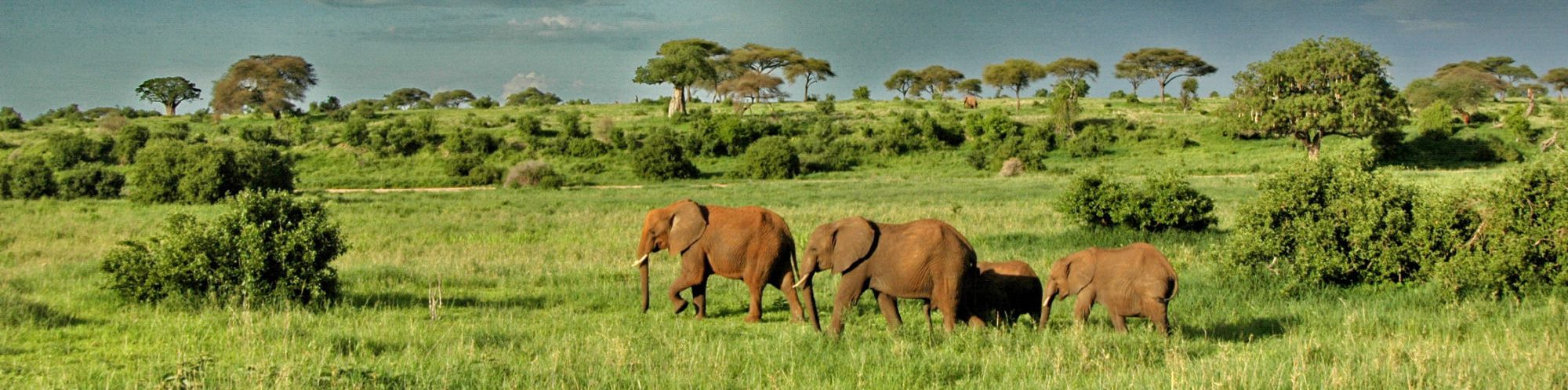 Tarangire-National-Park-elephants-roaming